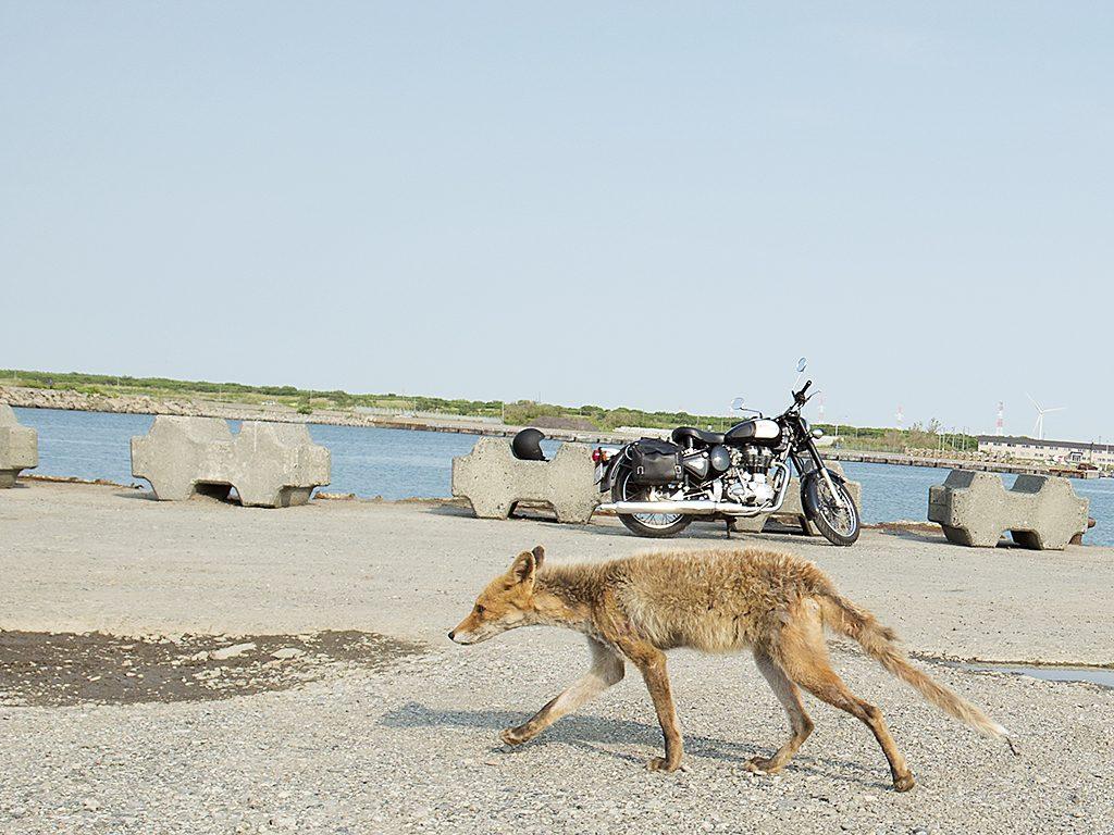 キツネとバイク